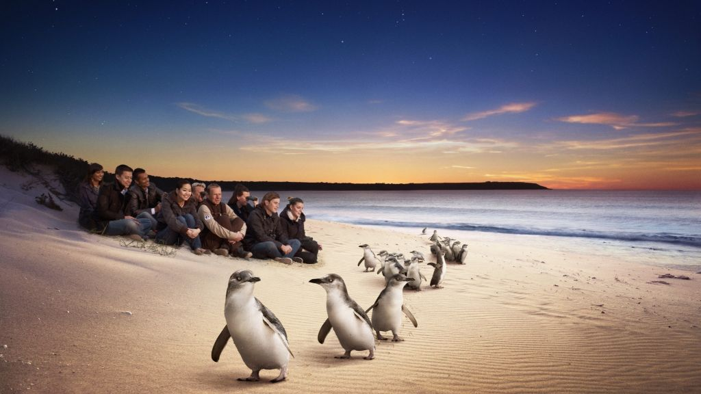 Phillip Island: 4 Parks Pass Including Penguin Parade