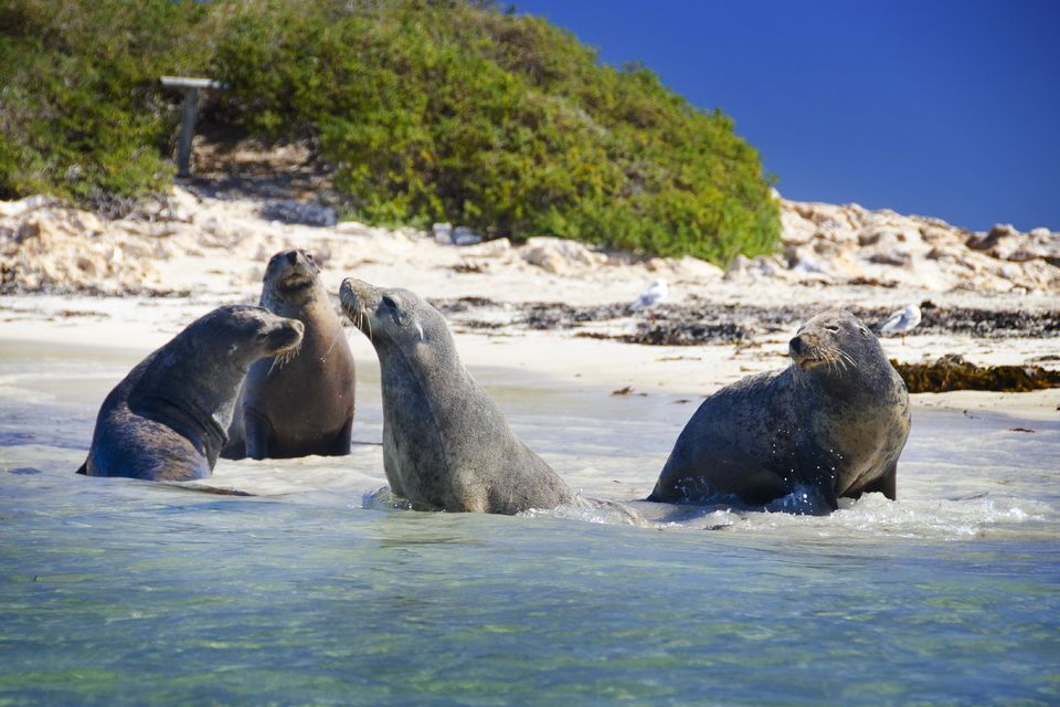 Shoalwater Islands Marine Park: Penguin and Sea Lion Cruise