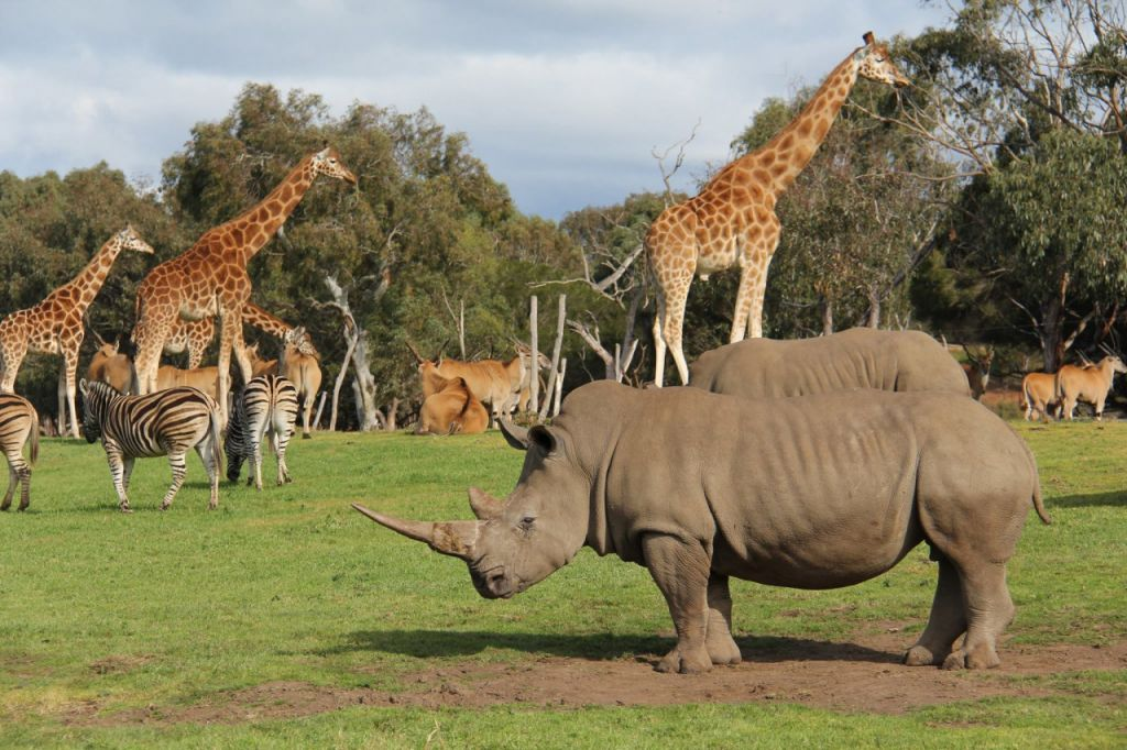 Melbourne: Werribee Open Range Zoo Admission Ticket