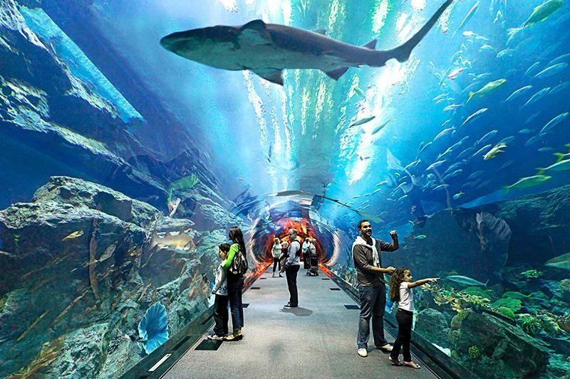 Dubai Aquarium and Burj Khalifa Combo Tickets