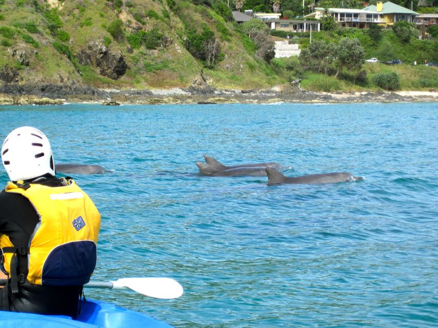 Byron Bay: Sea Kayak Tour with Dolphins & Turtles