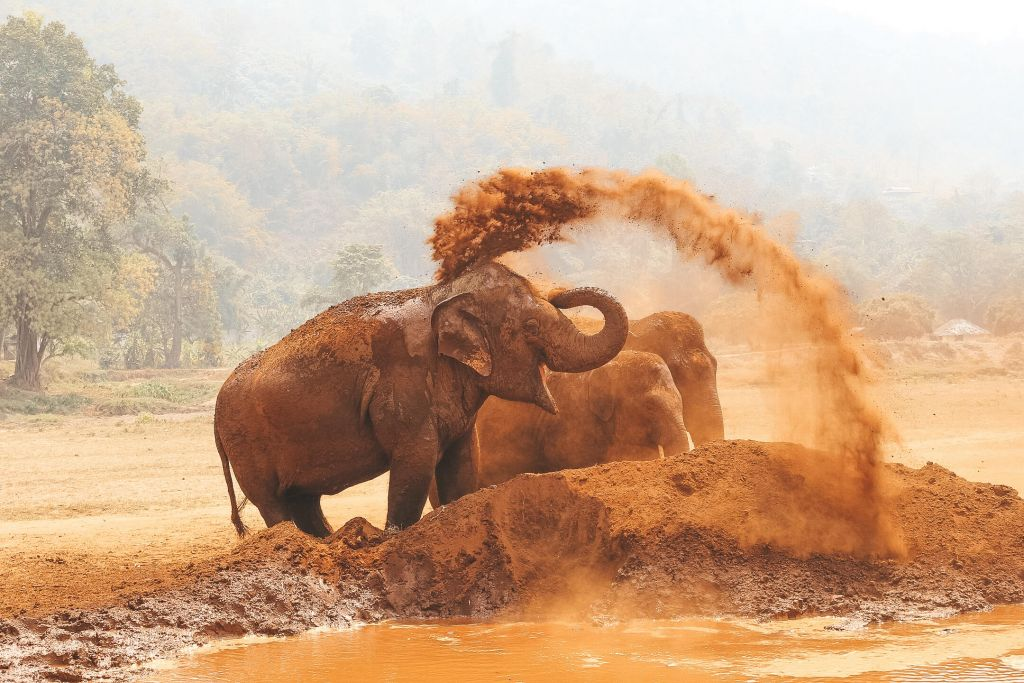 Chiang Mai Elephant Sanctuary Small Group Ethical Tour
