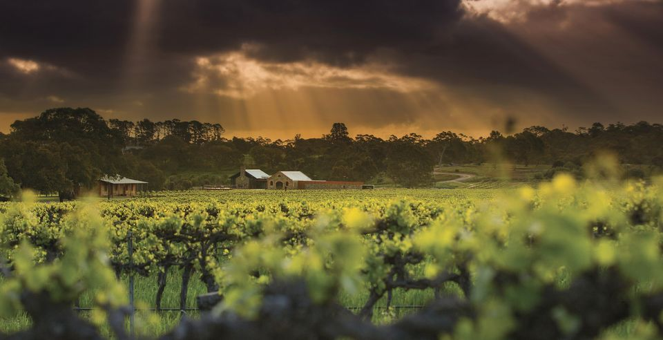 Adelaide: Barossa Valley Tour With Platter-Style Lunch