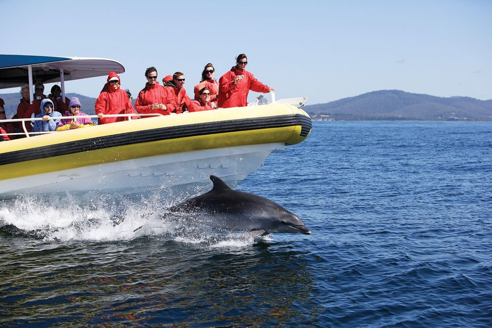 Bruny Island Wilderness Cruise